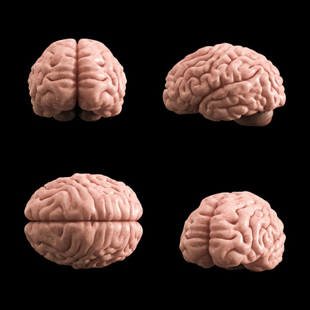 Kunstmatig menselijk hersenenmodel, het 3d teruggeven, zwarte achtergrond Stockfoto - 85891151