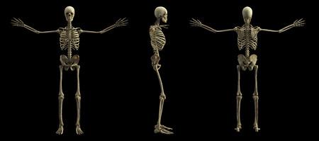 Digital skeleton model, 3d rendering, black background