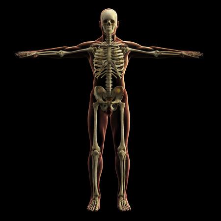 Modèle de squelette numérique, rendu 3D, fond noir Banque d'images - 85945962
