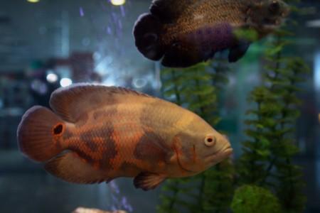 Tropical fishes in the aqurium Stock Photo - 4422624