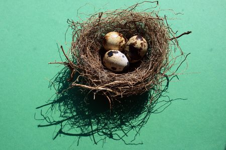 Beschrijving: Vogels nest met eieren op groene achtergrond