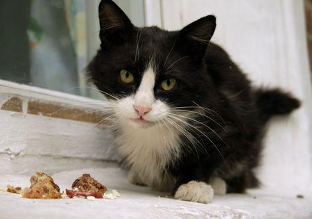 catnip: black and white cat