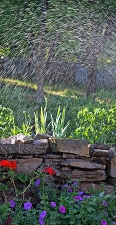 Sprinklers watering a beautiful garden photo