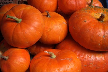 Collection of colorful pumpkins on the market photo