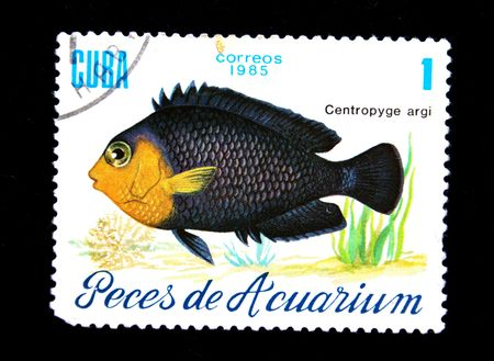 aquarian: stamp printed by Cuba shows a fish Centropyge argi, stamp from series  Stock Photo