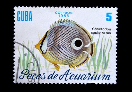 aquarian: stamp printed by Cuba shows a fish Chlaetodon capistratus, stamp from series