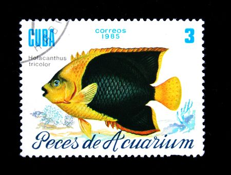 aquarian: stamp printed by Cuba shows a fish Holocanthus tricolor, stamp from series