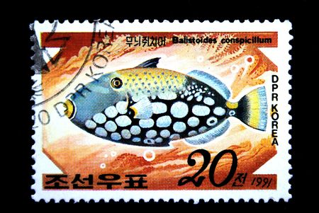 balistoides conspicillum: A stamp printed by DPR KOREA (North Korea) shows a fish Balistoides conspicillum, statp from series  Stock Photo