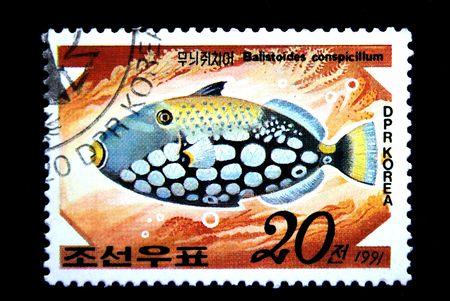 conspicillum: A stamp printed by DPR KOREA (North Korea) shows a fish Balistoides conspicillum, statp from series  Stock Photo