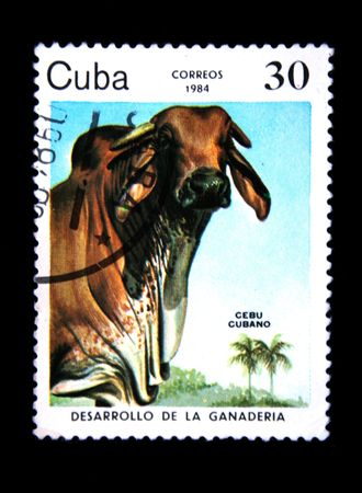 cir: A stamp printed by Cuba shows the Cow Caribe Cubano, stamp is from the series cir