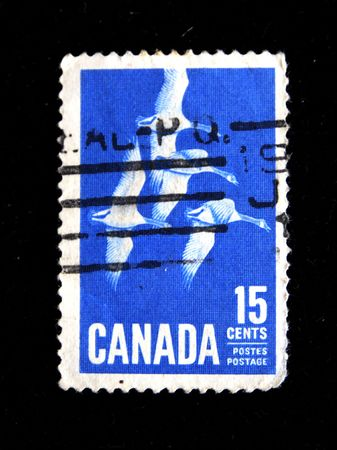 stamp printed in Canads shows four flying wild gooses circa 1970s photo