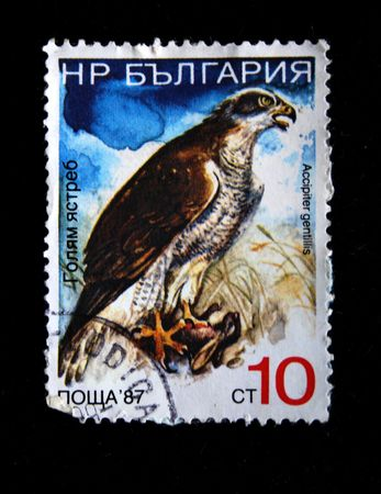 postmail: A stamp printed by Bulgaria shows the bald hawk (acsiprieter gentillis) cirla 1987