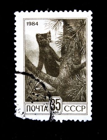 postmail: A stamp printed in USSR show russian sable circa 1984 Stock Photo