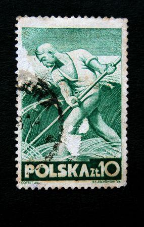mows: POLAND - CIRCA 1950s: A stamp printed in Poland shows peasant mows wheat, circa 1950s Stock Photo