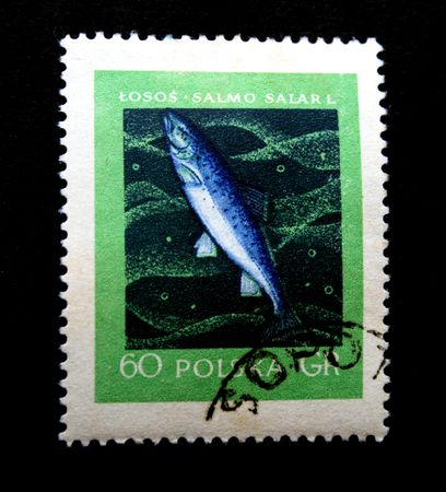 salmo: A stamp printed in Polska shows salmon (salmo salarl) one photo from series River fishes, circa 1950s Stock Photo