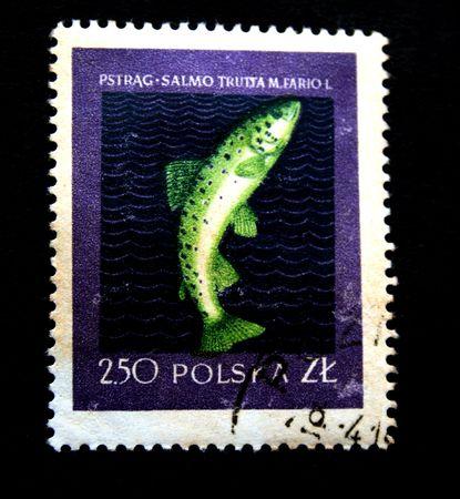 salmo trutta: A stamp printed in Polska shows trout (salmo trutta) one photo from series River fishes, circa 1950s