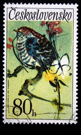 A stamp printed in Czechoslovakia shows bird Cuckoo, one stapm from series, circa 1972 Stock Photo - 5443187