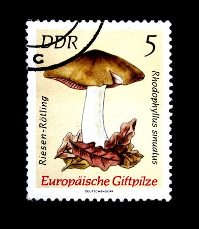 A stamp printed in DDR (East Germany) shows Entoloma sinuatum, one stamp from series, circa 1970s Stock Photo - 5443154