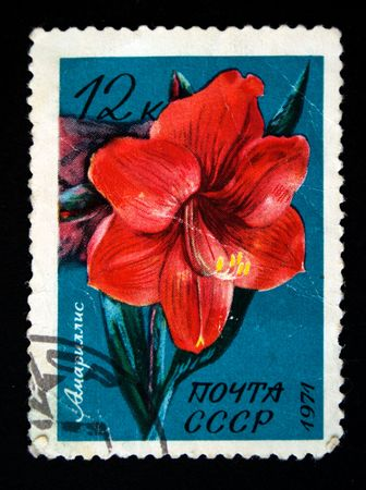 postmail: A stamp printed in the USSR shows amaralis, circa 1971