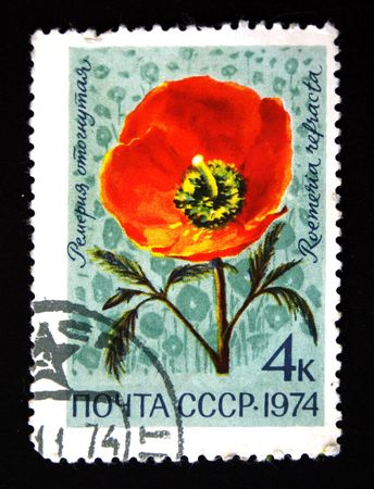 postmail: A stamp printed in the USSR shows Roemeria refracta, circa 1973