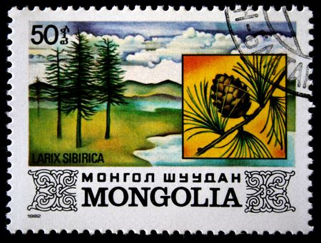 larix sibirica: A stamp printed in Mongolia shows Larix Sibirica, one stamp from series, circa 1982 Stock Photo