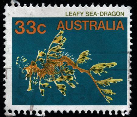 dragon swim: AUSTRALIA - CIRCA 1980s: A stamp printed in Australia shows Leafy Sea-Dragon, circa 1980s  Stock Photo