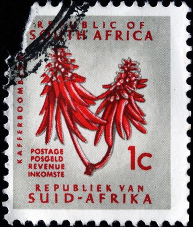 erythrina: SOUTH AFRICA - CIRCA 1965 A stamp printed in South Africa shows Erythrina caffra, circa 1965 Stock Photo