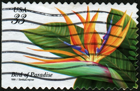 UNITED STATES - CIRCA 1999: A stamp printed in United States shows flower Bird of Paradaise - Strelitzia reginae, circa 1999 Stock Photo - 8330222