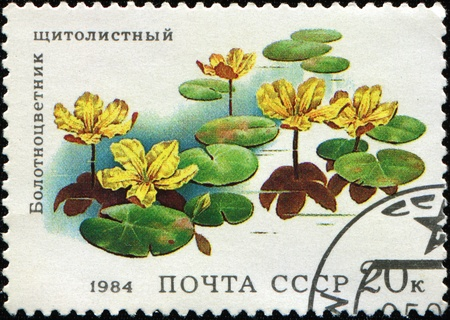 USSR - CIRCA 1984: A stamp printed in the USSR shows flower Nymphoides peltata, circa 1984 Stock Photo - 8341387