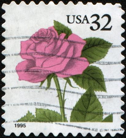 USA - CIRCA 1995 : A stamp printed in USA shows coral pink rose, circa 1995 Stock Photo - 8381387