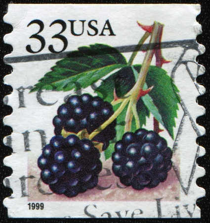 perforated stamp: UNITED STATES OF AMERICA - CIRCA 19995: A stamp printed in the USA shows Blackberries, circa 1999 Stock Photo