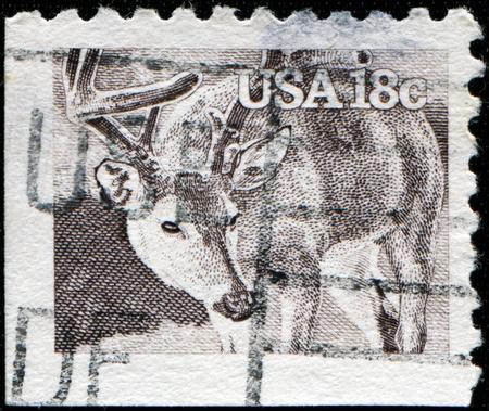 odocoileus: UNITED STATES OF AMERICA - CIRCA 1981: A stamp printed in the USA shows White-tailed Deer - Odocoileus virginianus, circa 1981