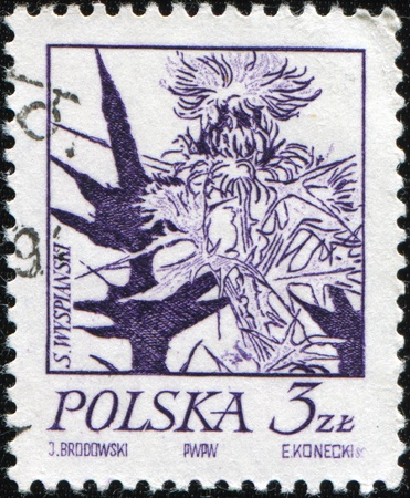 POLAND - CIRCA 1960s: A stamp printed in Poland shows an image of a Cotton Thistle - Onopordum acanthium, one stamp of series, circa 1960s photo