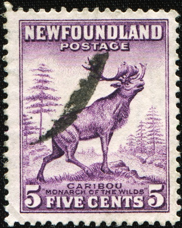 NEWFOUNDLAND - CIRCA 1932: A stamp printed in Newfoundland shows Caribou - monarch of the wild (Rangifer tarandus pearyi), circa 1932 Stock Photo - 8586709