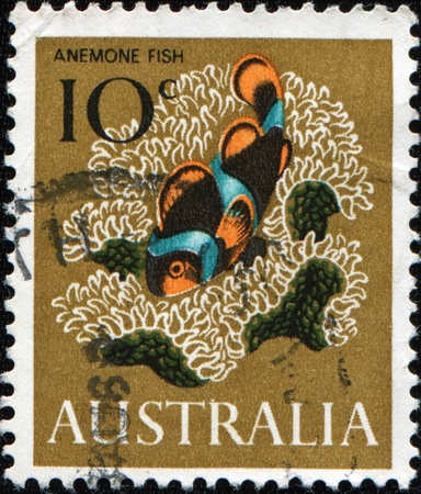 humbug: AUSTRALIA - CIRCA 1966: A stamp printed in Australia shows anemone fish or Clownfish - Amphiprion akindynos, circa 1966  Stock Photo