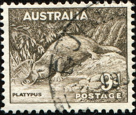 AUSTRALIA - CIRCA 1937: A stamp printed in Australia shows platypus - Ornithorhynchus anatinus, circa 1937  Stock Photo - 8681982