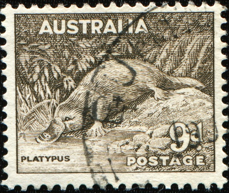 collectable: AUSTRALIA - CIRCA 1937: A stamp printed in Australia shows platypus - Ornithorhynchus anatinus, circa 1937