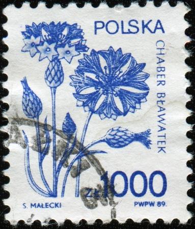 POLAND - CIRCA 1989: A stamp printed in Poland shows Cornflower, Bachelor's button, Bluebottle, Boutonniere flower, Hurtsickle, Cyani flower - Centaurea cyanus, circa 1989 Stock Photo - 8776967