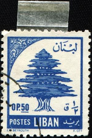 LEBANON - CIRCA 1955: A stamp printed in Lebanon shows Lebanon cedar, circa 1955 photo