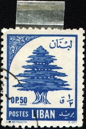 cedar tree: LEBANON - CIRCA 1955: A stamp printed in Lebanon shows Lebanon cedar, circa 1955