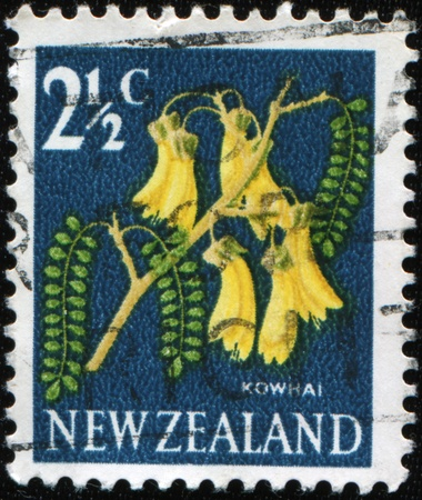 NEW ZEALAND - CIRCA 1964: A stamp printed in New Zealand show kowhai tree, which is endemic to New Zealand, series, circa 1964  photo