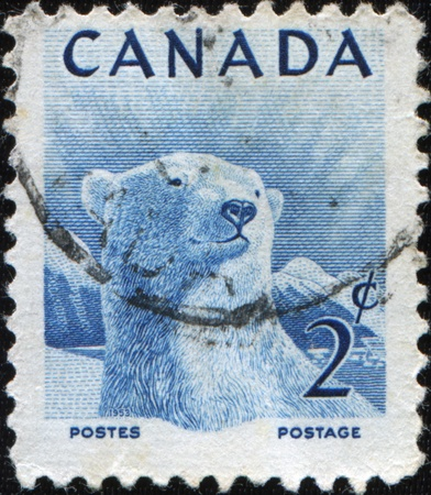 CANADA - CIRCA 1953: stamp printed by Canada, shows Polar bear, circa 1953 Stock Photo - 8790414
