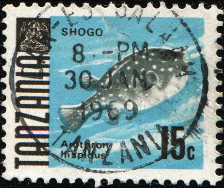 puffer: TANZANIA - CIRCA 1969: A stamp printed in Tanzania shows fish white-spotted puffer - Arothron hispidus, circa 1969