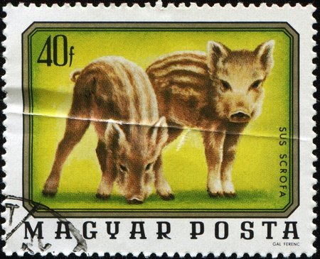 HUNGARY - CIRCA 1976: A stamp printed in Hungary shows piglets of wild boar, circa 1976 Stock Photo - 8878456