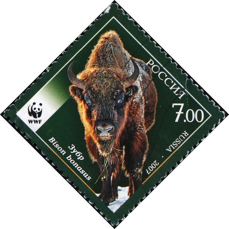 postmail: RUSSIA - CIRCA 2007: A stamp printed in Russia  shows European bison - Bison bonasus, circa 2007