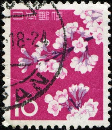 sello postal: Jap�n - alrededor de 1961: Un sello impreso en espect�culos de Jap�n Cherry Blossoms, alrededor de 1961