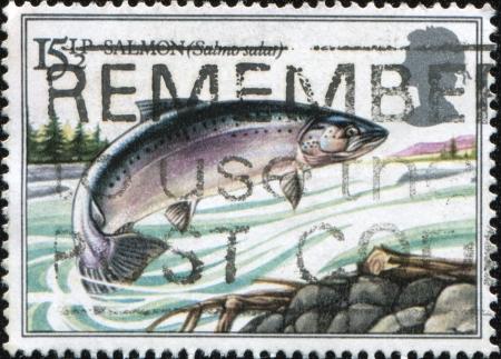 UK - CIRCA 1983: A stamp Printed in United Kingdom shows jumping salmon,  series British River Fishes, circa 1983 photo