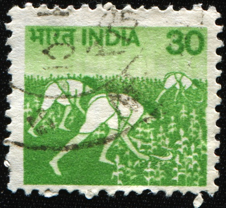 rural india: INDIA - 1979: A stamp printed in India shows workers using sickles to harvest grain, circa 1979 Stock Photo