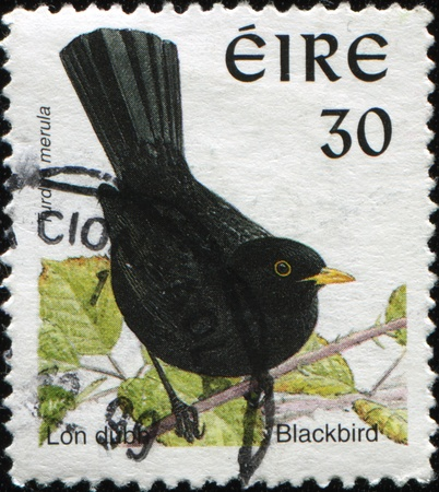 postmail: IRELAND - CIRCA 1999: A stamp printed in Ireland shows Common Blackbird -Turdus merula, circa 1999