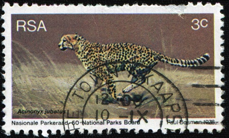 SOUTH AFRICA - CIRCA 1976: A stamp printed by South Africa shows the Cheetah - Acinonyx jubatus, stamp is from the series, circa 1976 Stock Photo - 9065970